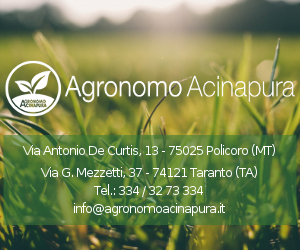 Agronomo Acinapura
